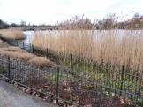 The small Reedbed