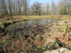 Thornhill Pond